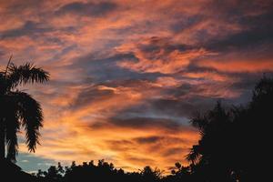 coucher de soleil sur les palmiers photo