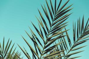 feuilles vertes sur fond sarcelle photo