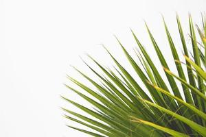 feuilles de plantes vertes photo