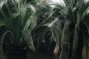 palmier feuille verte