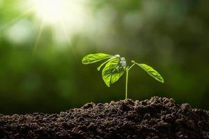 semis vert dans le sol