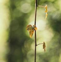 feuille séchée brune photo