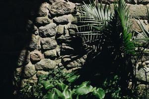 palmier vert photo