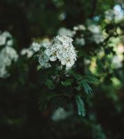 fleur blanche dans l'objectif tilt shift