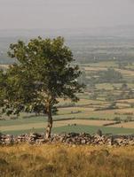 arbre vert sur champ d & # 39; herbe verte