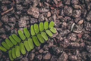 plante de fougère verte