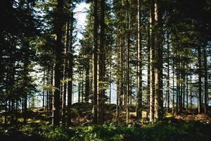arbres verts en été