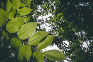 La photo en gros des arbres à feuilles vertes