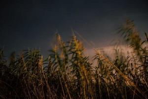 champ d'herbe de blé photo