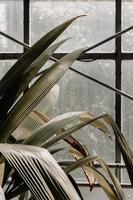 feuilles près de la fenêtre photo