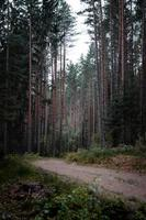 chemin de terre marron