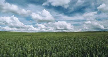 Champ d'herbe verte sous un ciel bleu avec des nuages