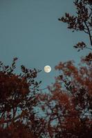 pleine lune sur les arbres photo