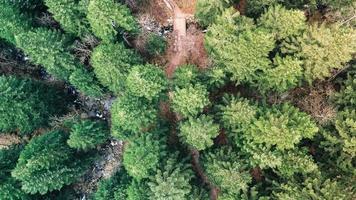 vue aérienne des arbres verts