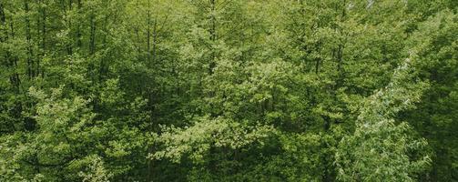 bannière d'arbres à feuilles vertes