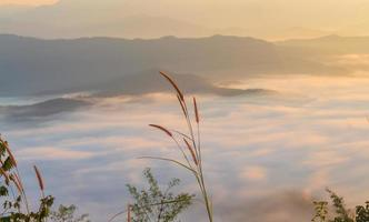 paysage herbe et brume matinale photo