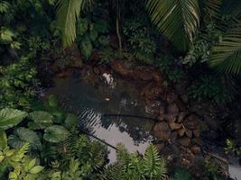 flaque d'eau entourée de roches et de feuilles