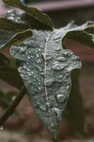 gouttes d'eau sur une feuille verte photo