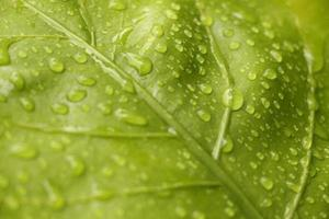 feuille verte avec des gouttelettes d'eau photo