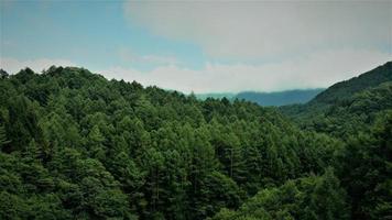 photo aérienne de montagnes couvertes d'arbres