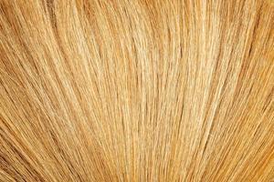 texture de l'herbe de bambou photo