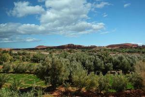 vue paysage du champ de culture au maroc.
