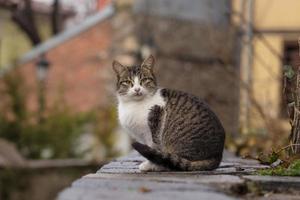 gros plan, photographie, de, chat tigré photo