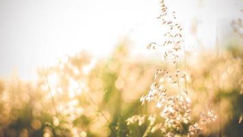 gros plan, de, herbe sauvage