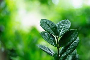 feuilles vertes sur fond vert flou