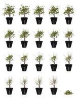 plante en pot en cours photo
