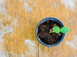 jeune arbre en pot sur table, point de mise au point sélectif. photo