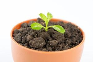 jeune arbre vert en pot de fleur photo