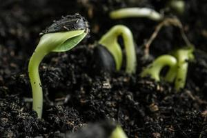 gros plan, de, semis vert photo