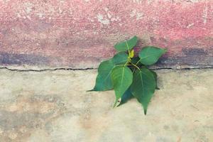 arbre poussant dans le béton photo
