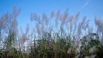 plante à fleurs avec ciel bleu photo