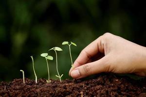 croissance des plantes - nouveaux départs photo