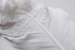 gros plan photo de plume