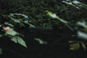 fougères et arbustes