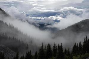vallée couverte de brouillard