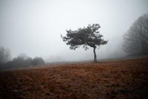 arbre solitaire dans le champ brun
