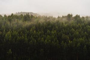 forêt verte pendant une journée brumeuse