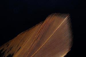 bandes de plumes brunes et blanches