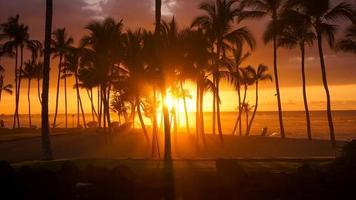 photo silhouette de palmiers