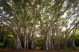 photo d'arbres pendant la journée