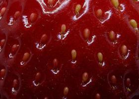 graines de fraise rouge