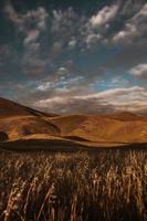 champ de blé sous un ciel nuageux