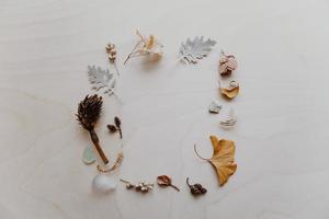 photographie à plat de feuilles