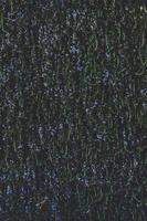 gros plan, de, fleurs bleues photo