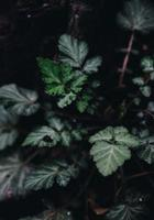 La photo en gros plan d'une plante à feuilles vertes