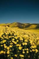 champ de fleurs sous le ciel bleu